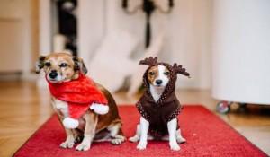 Hunde Weihnachten | Kosmetik Anabelle Scheer
